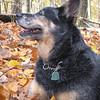 Random dog wandering in the woods