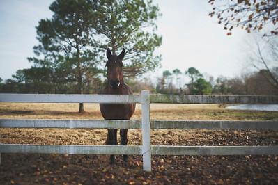 A Horse says Hello