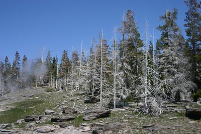 Petrified trees?