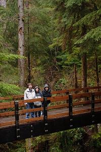 Bridge in Quinault Rainforest