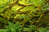 """And you wonder why they call it the """"Hall of Mosses"""""""