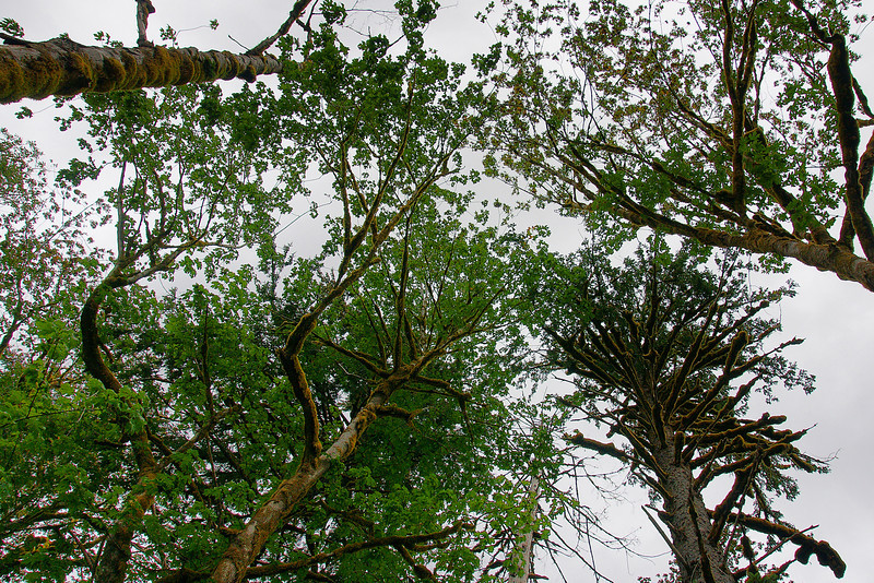 Looking up once in a while, felt as though the giant canopy is converging on you.