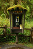 Even the phone booth starts growing here!