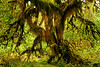 Club moss covered every available non-green area of this tree - an impressive sight to the say the least.<br /> I could imagine this being one of the talking trees in 'Lord of the Rings'