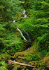 Bunch Creek Falls over Quinault river.<br /> Just inside the Park boundary.