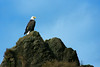 King of all he surveys:<br /> A bald eagle perched high