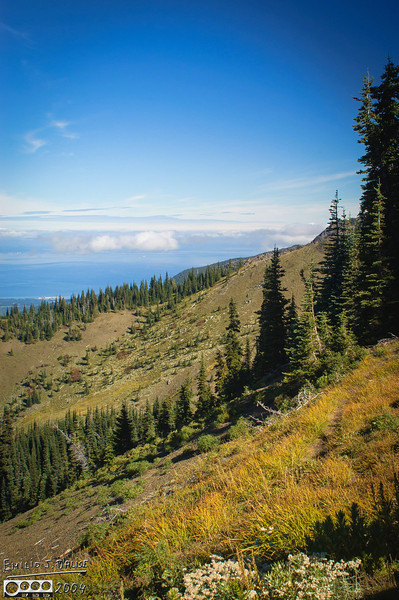 View along the Hurricane Ridge trail