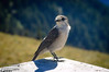 . . . and bird life.  I think it's a Gray Jay.