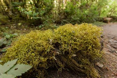 Hoh Rainforest, Olympic National Park, Washington