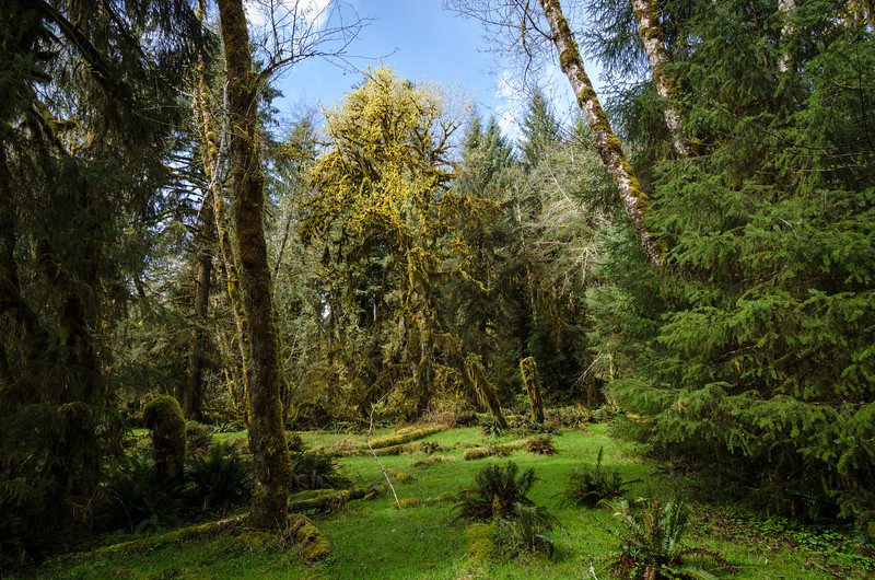 Hoh Rainforest | March 2015
