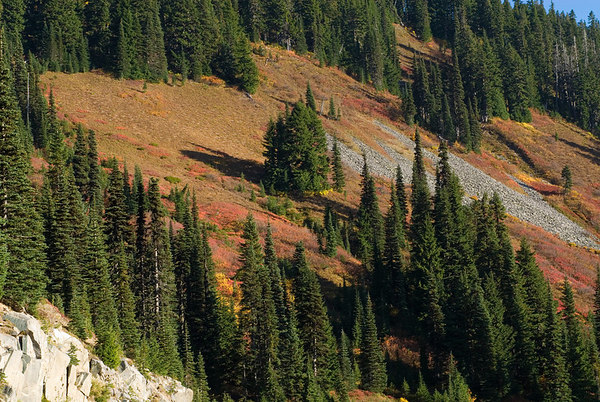 Fall at Mount Ranier