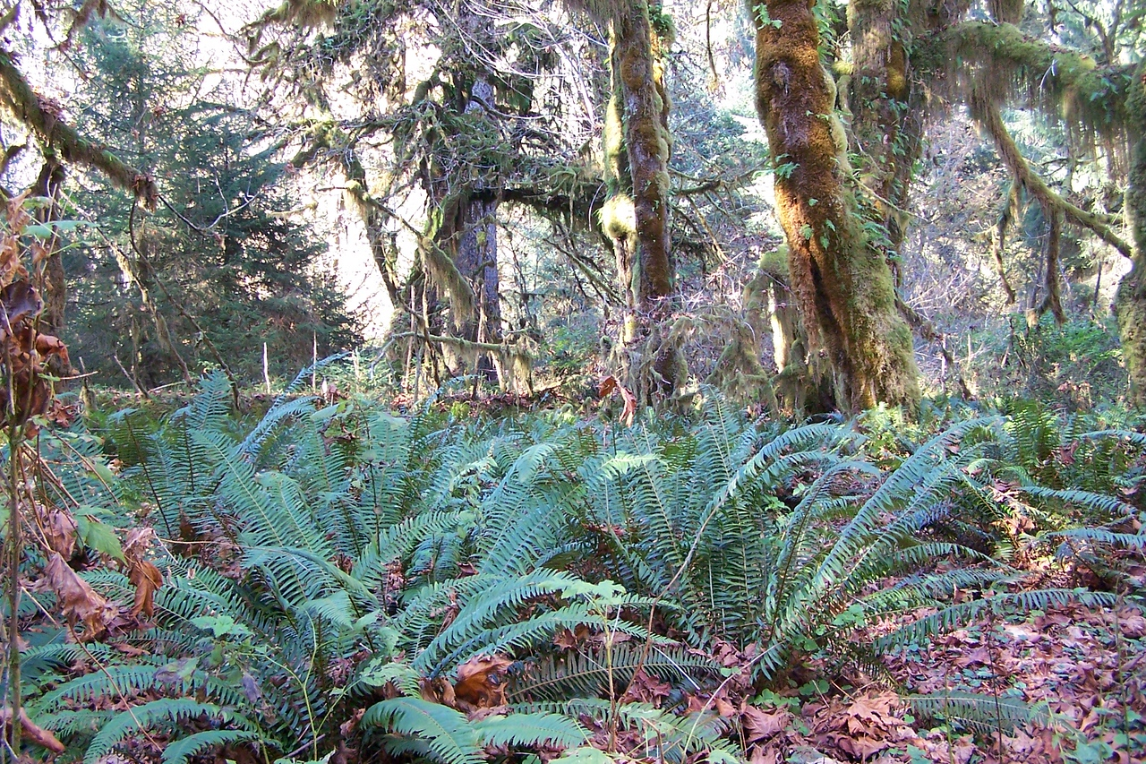 These ferns are 5 to 7 feet tall.