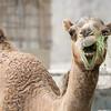 Wednesday, the camel.  Her boyfriend is Humpfrey.