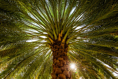 Birkat Al Mouz (Ad Dakhiliyah, Sultanate of Oman 2017)