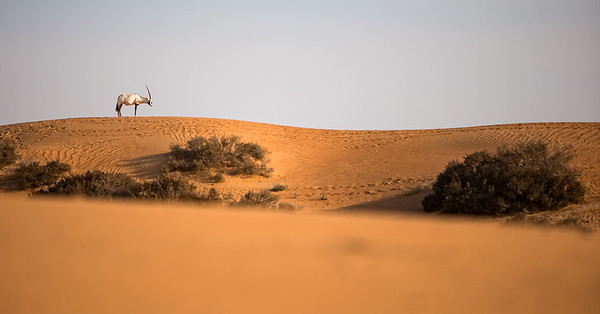 (Arabaian Desert, United Arab Emirates 2017)