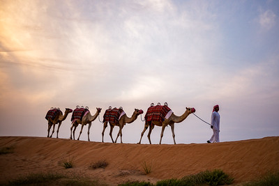 The Camel Caravan (Arabian Desert, United Arab Emirates 2017)