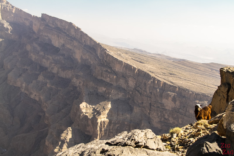 Randonnée Jebel Shams Balcony walk Oman 4