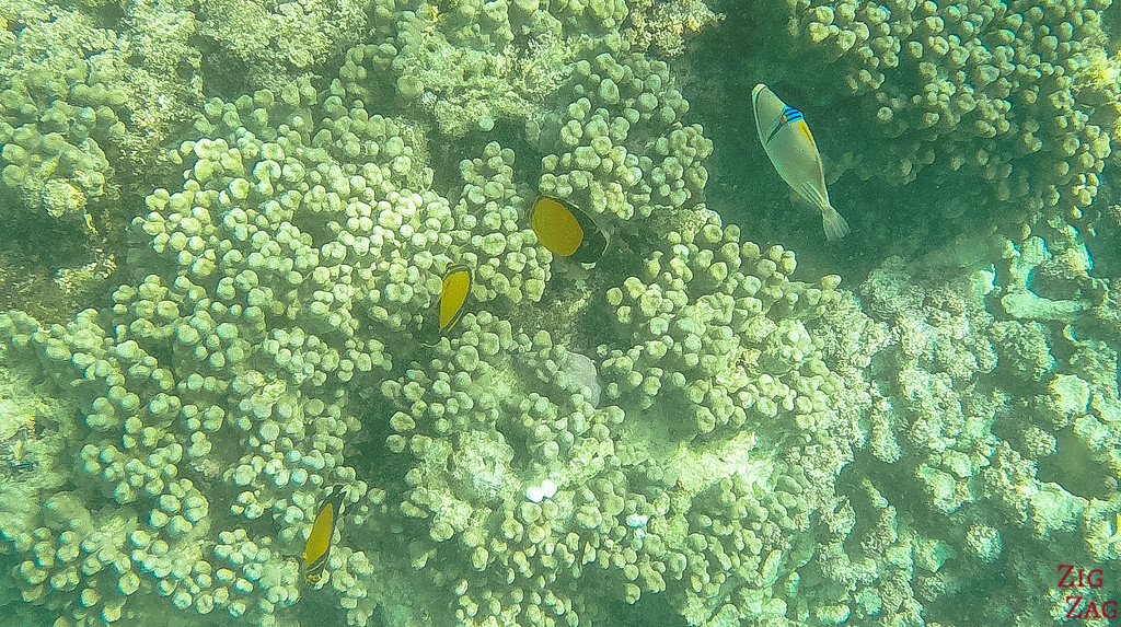 Snorkeling in the Daymaniyat islands
