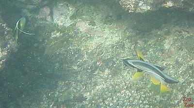 Fish Oman Snorkeling 6