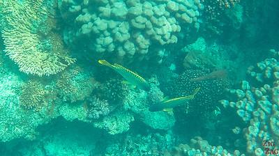 Fish Oman Snorkeling 3