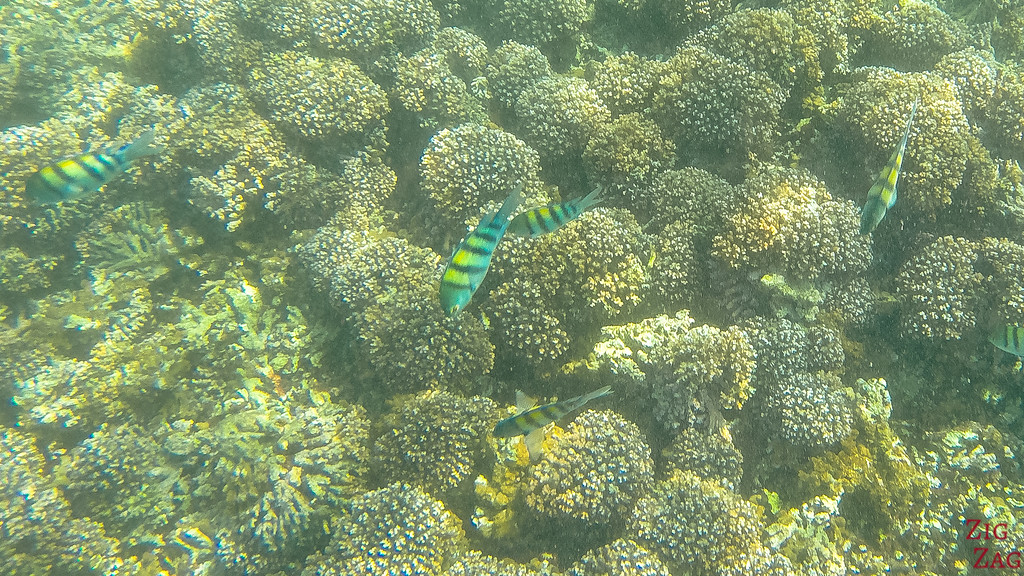 Snorkeling in the Bandar Khayran Reserve from Muscat 2