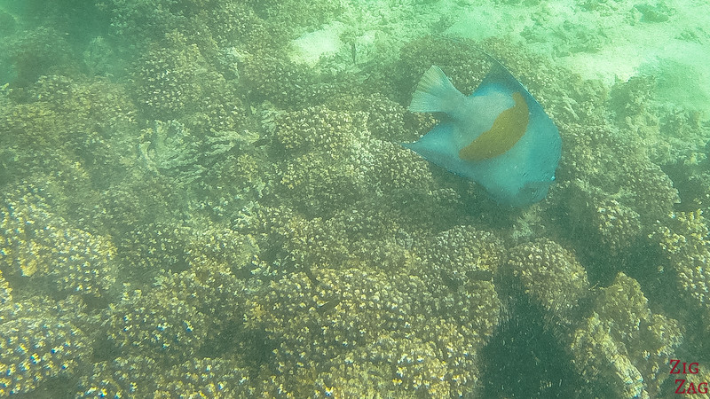 Snorkeling in the Bandar Khayran Reserve from Muscat 5