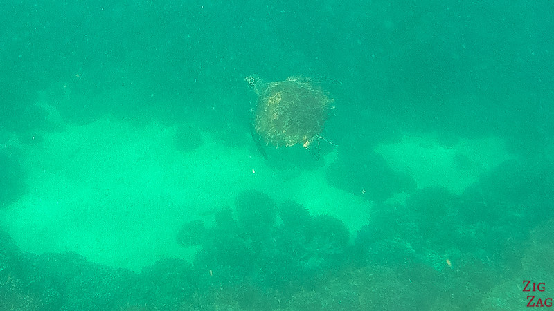 Swimming with turtle in the Bandar Khayran Reserve from Muscat 2