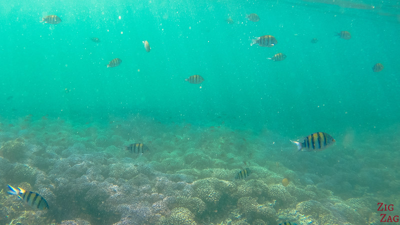 Snorkeling in the Bandar Khayran Reserve from Muscat 1