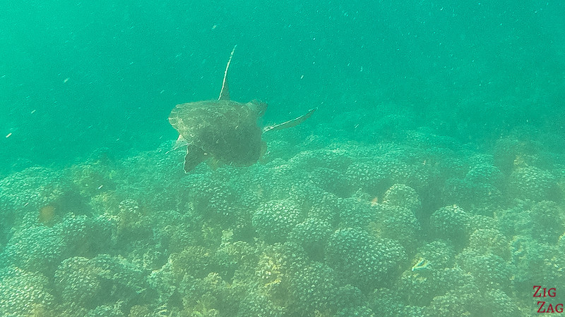 Swimming with turtle in the Bandar Khayran Reserve from Muscat 1