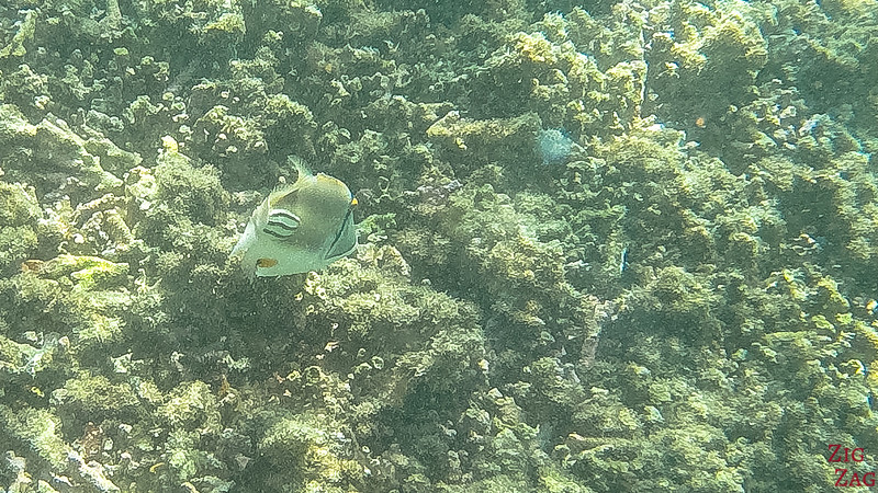 Snorkeling in the Bandar Khayran Reserve from Muscat 6