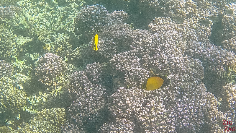 Snorkeling in the Bandar Khayran Reserve 7