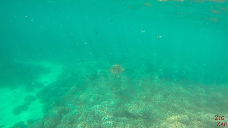 Swimming with turtle in the Bandar Khayran Reserve from Muscat 3