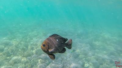 Fish Oman Snorkeling 1