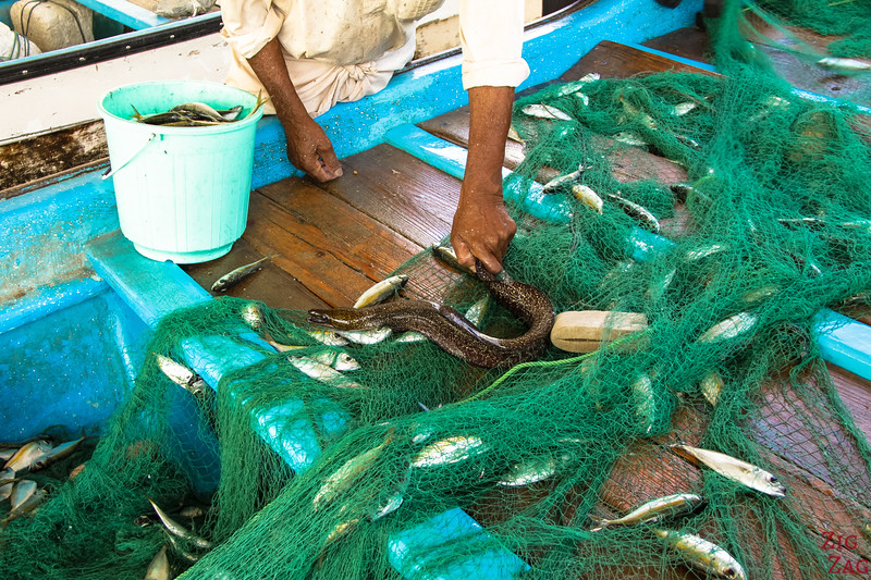 removing fish from net at Muttrah Fish market, Muscat 3