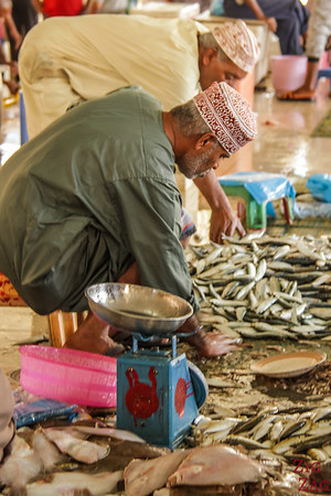 Fishes at Muttrah Fish market, Muscat 4