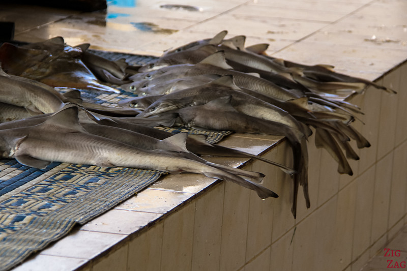 Fishes at Muttrah Fish market, Muscat 2