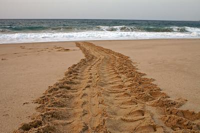 Turtle track
