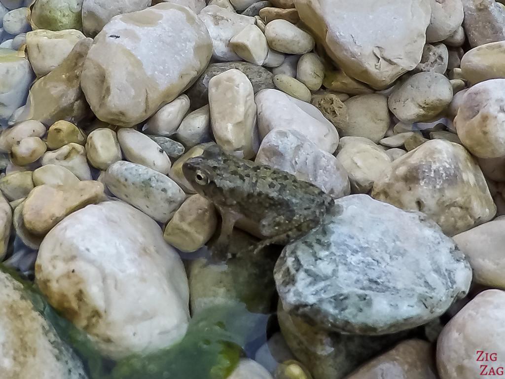 Frog 2 - Wadi Shab - Oman