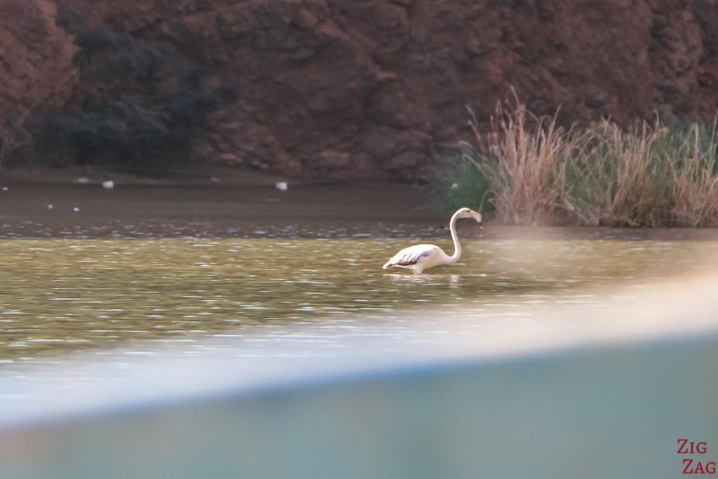 Bird Oman 2