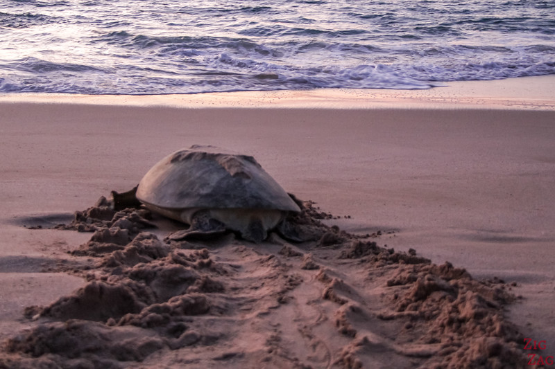 Best time to see turtles in Oman