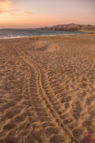 Place Ras Al Jinz turtle Reserve Oman 2