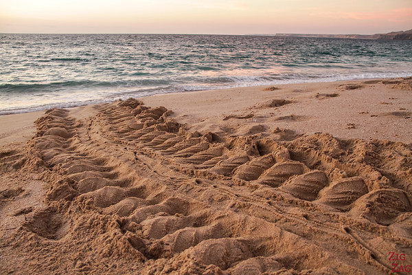 Turtle tracks at Ras Al Jinz Beach - Oman 2