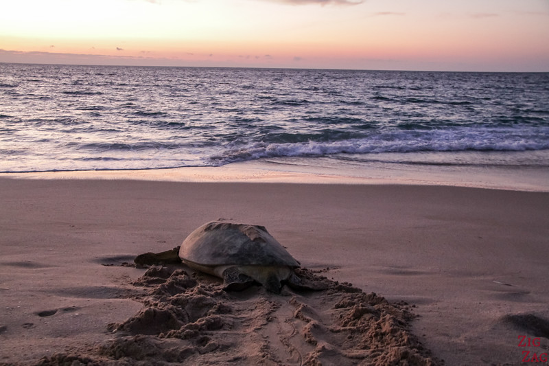 Turtle at sunrise 2