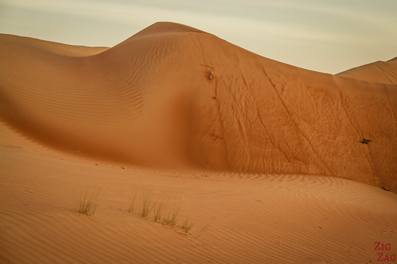 Face in dune - Wahiba Sands - Oman 1