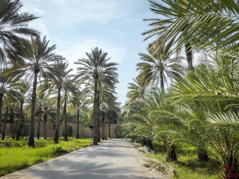Birkat Al Mawz plantations 3