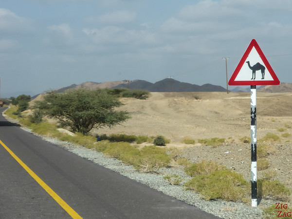 traffic sign Oman - camel