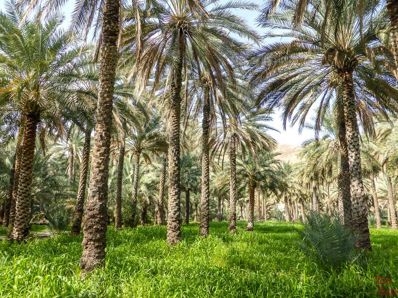 Birkat Al Mawz plantations 2