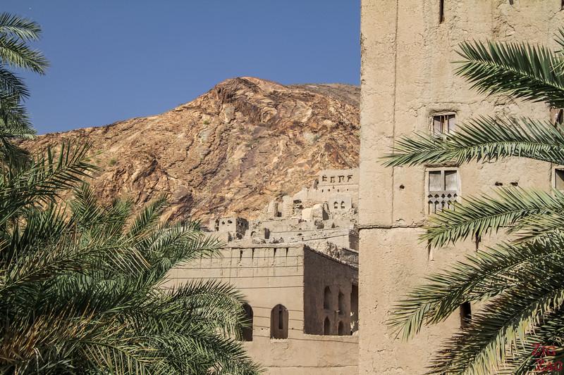 Birkat Al Mawz plantations 5