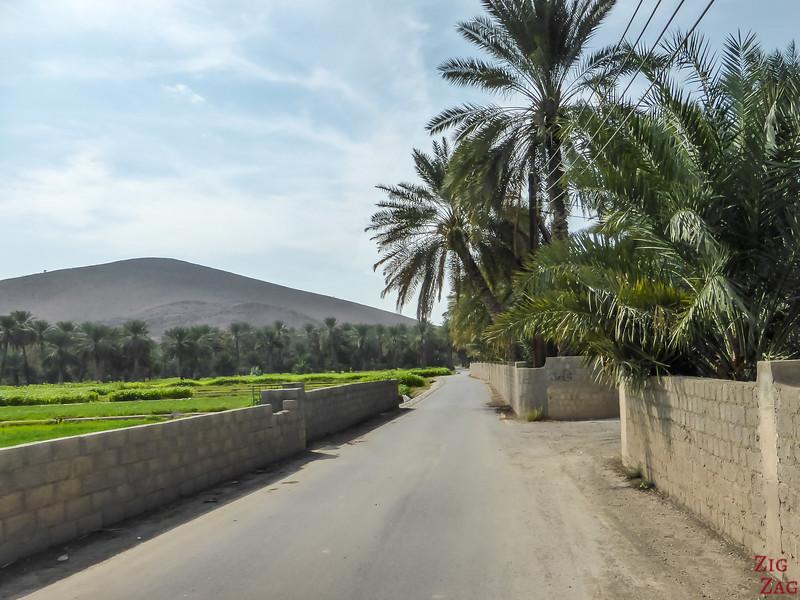 Birkat Al Mawz plantations 1
