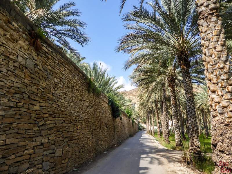 Birkat Al Mawz plantations 4